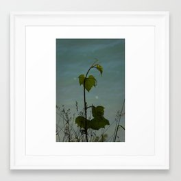 Plant of a Bluff Framed Art Print