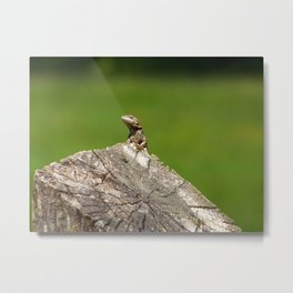King of the fencepost! Metal Print