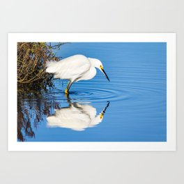 Snowy Egret Reflection at Bolsa Chica Ecological Reserve in Huntington Beach, California Art Print