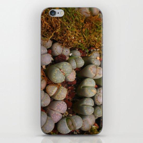Cactus Stones iPhone & iPod Skin