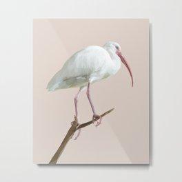 Poly White Ibis Metal Print