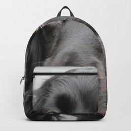dog muzzle big-eared ears Backpack