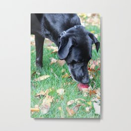 Bella's Find Metal Print