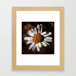Colorado Wild Flower Framed Art Print