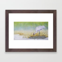 Whooping Crane, A New Dawn Framed Art Print