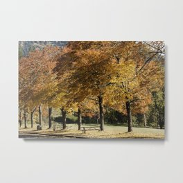 Fall Colors in Lowell Oregon Metal Print