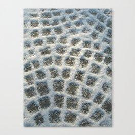 winter path II Canvas Print