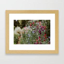Sweet Pea Garden Framed Art Print