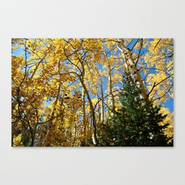 Nor Wind To Blow Canvas Print