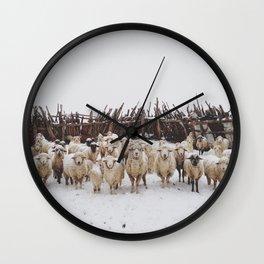 Snowy Sheep Stare Wall Clock
