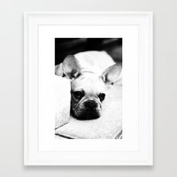 french bulldog Framed Art Prints featuring French Bulldog by Falko Follert Art-FF77