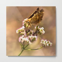 Yellow-banded Skipper Butterfly Metal Print