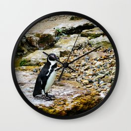 Penguin stare Wall Clock