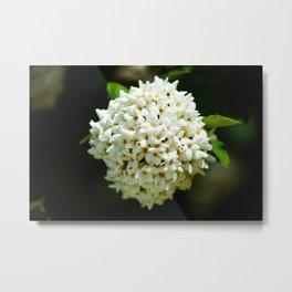 Bouquet of blossom Metal Print