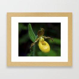 Lady Slipper 2 Framed Art Print
