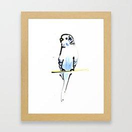 Blue and Yellow Pet Budgie Print Framed Art Print