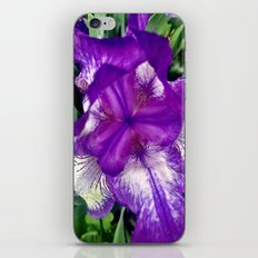 Purple in Bloom iPhone & iPod Skin