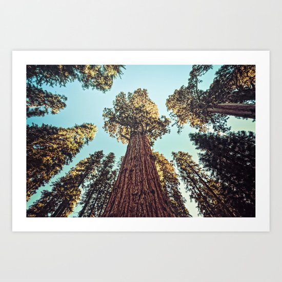The Largest Tree in the World Art Print