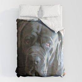 My dog Ovelix! Comforters