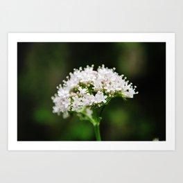 Tiny white garden flowers Art Print
