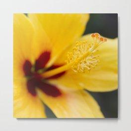 Boreas Tropical Hibiscus Lemon Drop Metal Print