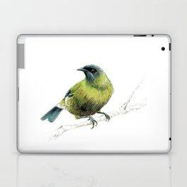 Korimako, the Bellbird Laptop & iPad Skin
