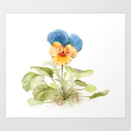 Watercolor illustration of pansy flower Art Print