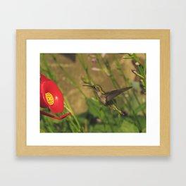 Hovering hummingbird 33 Framed Art Print