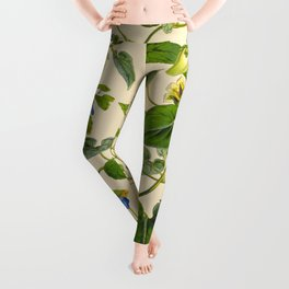 Blue And Yellow Himalayan Flowers Green Leaves Vintage Scientific Botanical Illustration Leggings