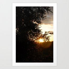 Cedar and Sun Art Print