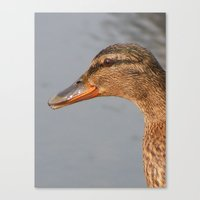 duck Canvas Prints featuring Duck by  Alexia Miles photography