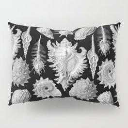 Black and White Beach Shells Pillow Sham