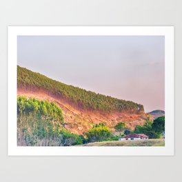 Eucalyptus plantation Art Print