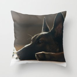 Play break of a Malinois Throw Pillow