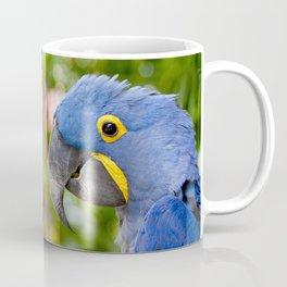 Blue Hyacinth Macaw - Anodorhynchus hyacinthinus Coffee Mug