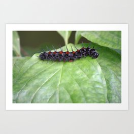 Mourning Cloak Art Print