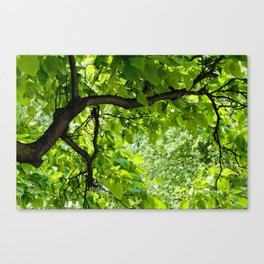 Peek into the Summer Trees Canvas Print