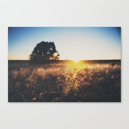 an Arizona sunset ... Canvas Print