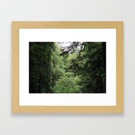 Transparent Forest Framed Art Print
