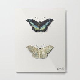 Boven- en onderaanzicht van een vlinder by Georgius Jacobus Johannes van Os (1782-1861) Metal Print