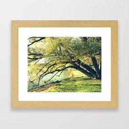 Trees on the Bank Framed Art Print