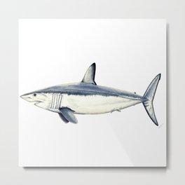 Mako shark (Isurus oxyrinchus) Metal Print