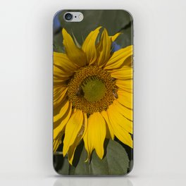 Lively Sunflower iPhone Skin