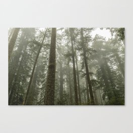 Memories of the Future - nature photography Canvas Print