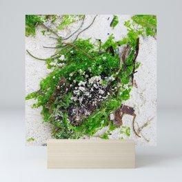 Algae_Seaweeds Mini Art Print
