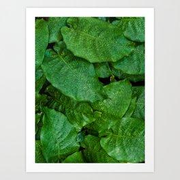 Calathea Musaica Tropical Houseplant Art Print