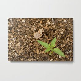 Cannabis Sprout Metal Print