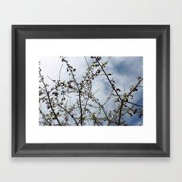 Nature Days Framed Art Print