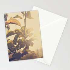 Fall Sun Stationery Cards