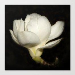 Yulan-Magnolia on black Canvas Print